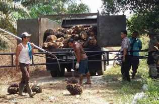 Masyarakat Desa Pulau Birandang Kampar Kirim Surat ke Presiden Dan Kapolri Merasa Diteror Aparat