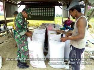 Tingkatkan Produksi Padi Petani, Danramil 03/Tempuling Terus Pacu Semangat Babinsa