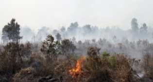 Siak Waspadai Ancaman Karhutla, Alfedri: Posko Kabupaten Harus Mulai Diaktifkan