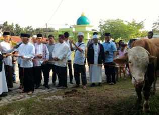 Jelang Qurban Sapi dari Jokowi 935 KG, dan Sapi dari Gubri 400KG