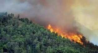 Jikalahari: Beranikah Wan Thamrin Hasyim Menghentikan Bencana Ekologis di Riau?