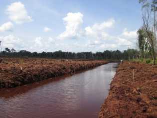 JMGR Sebut APR Ancaman Baru Kawasan Gambut di Riau