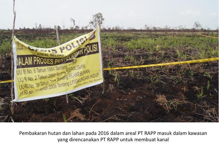 Organisasi Lingkungan Desak Menteri LHK Segera Cabut Izin PT RAPP
