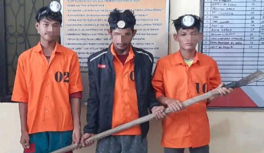 Nyuri 70 Tandan Buah Sawit, 3 Pemuda ini Diamankan Warga