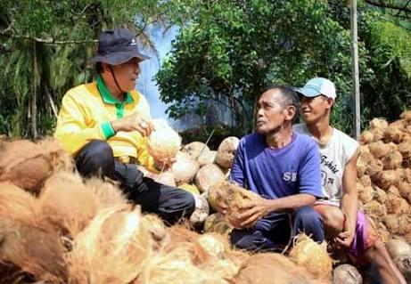 Produksi Kelapa di Inhil Capai 10 Juta Perhari