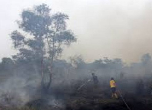 Lahan Gambut di Kabupaten Kepulauan Meranti 12 Hektar Terbakar Selama 3 Hari