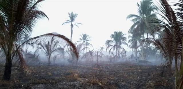 Kronologi Petani Inhil Tewas Terpanggang saat Padamkan Api di Kebunnya