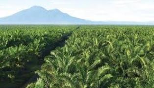 Koalisi EoF Terbitkan Dua Laporan Investigatif Soal Kebun Sawit di Riau, Ini Hasilnya