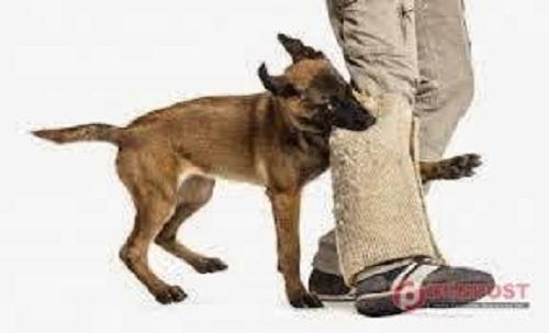 Anjing Bebas Berkeliaran, Warga Marpoyan Damai Desak Pemko Bertindak